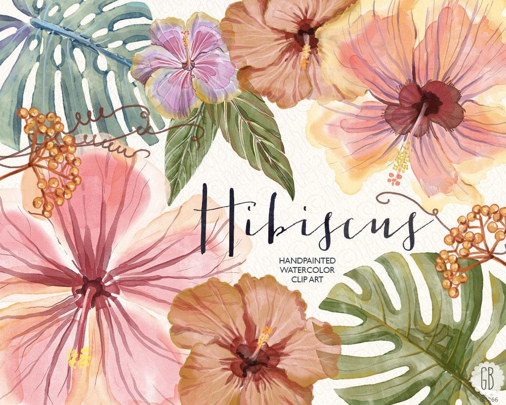Le succès de l'hibiscus partout !